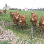 p_Meet_some_of_the_Limousin_inhabitants